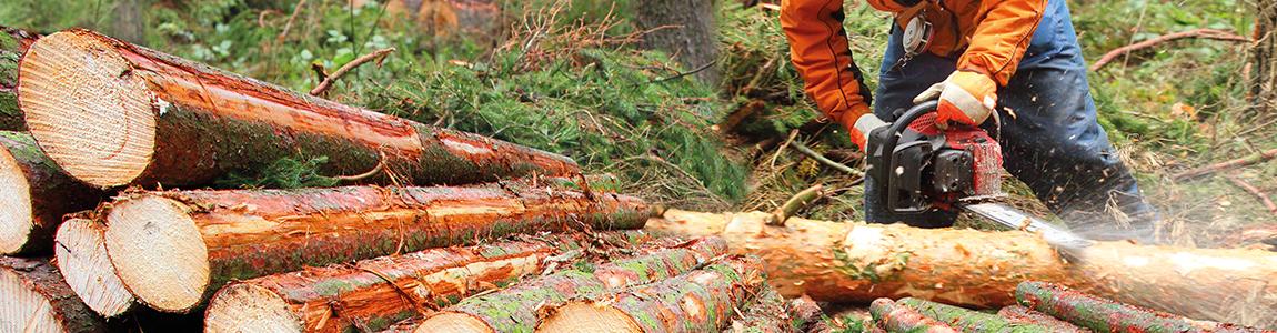 Mission Wallonne des Secteurs Verts - Formation et prévention secteur bois et foret bois et foret