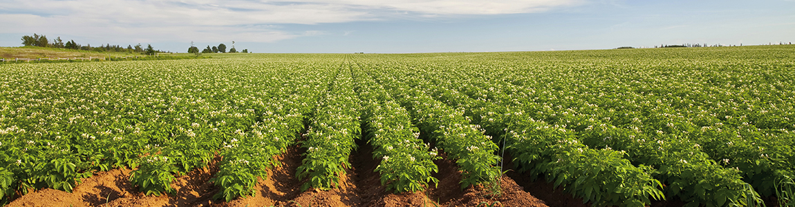 Mission Wallonne des Secteurs Verts - Formation et prévention secteur agriculture