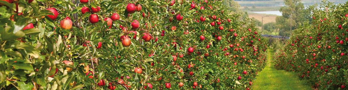 Mission Wallonne des Secteurs Verts - Formation et prévention secteur horticulture